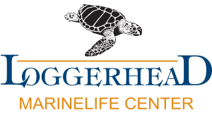 loggerhead marinelife center logo 1